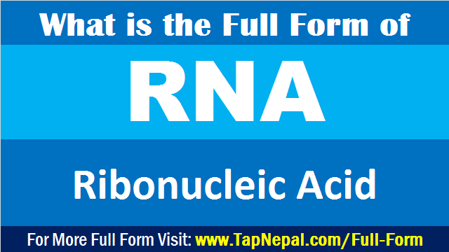RNA Full Form in Medical Biology in English Hindi